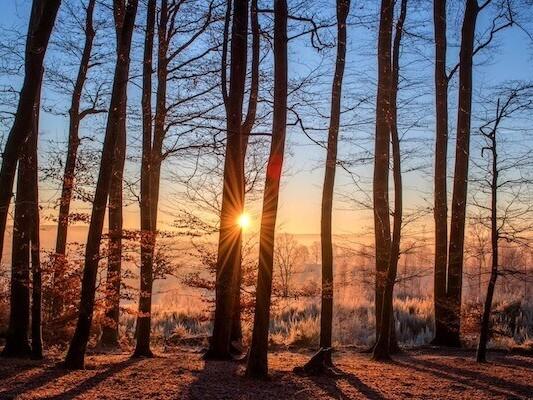 December Forest