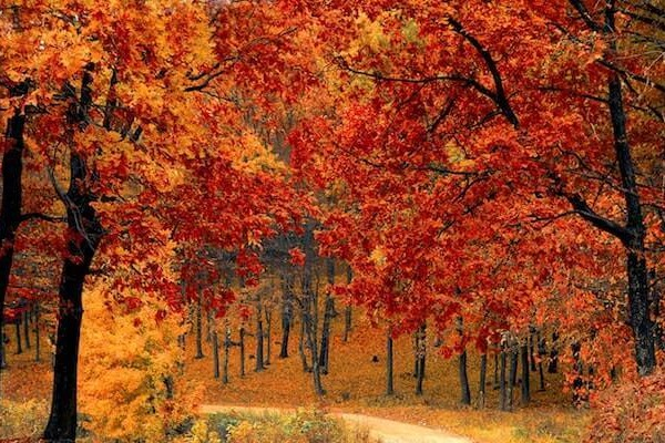 Fullscript October Catalog Updates
