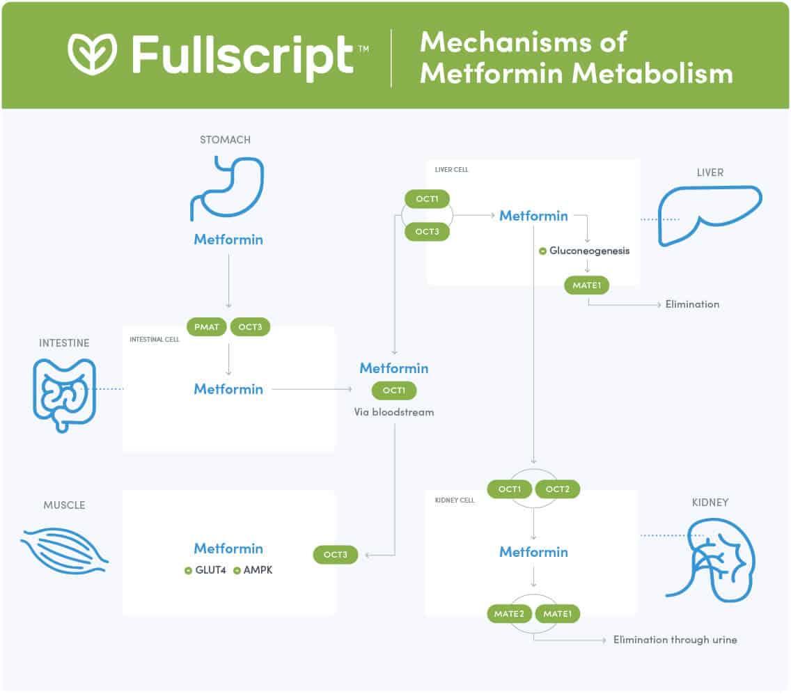 Fullscript - Metformin Metabolism