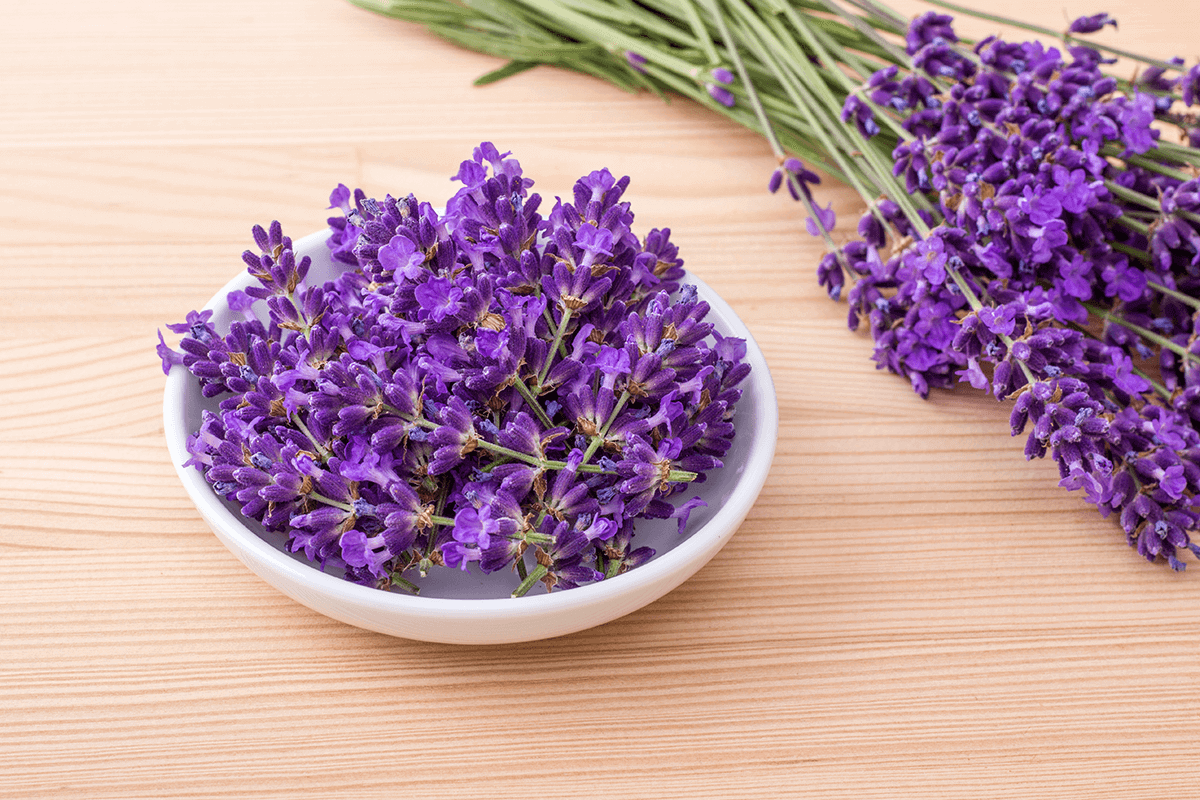 lavender plant on table and in a white bowl