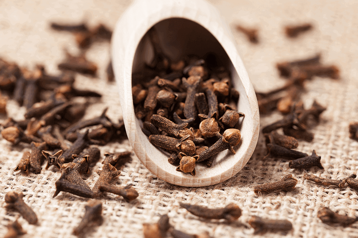Medical herb called Clove in plant form