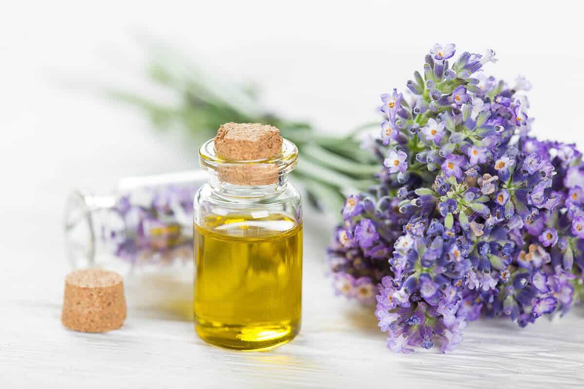 lavender lavender flowers next to clear essential oil bottle