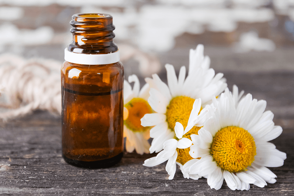 Chamomile oil next to chamomile flower