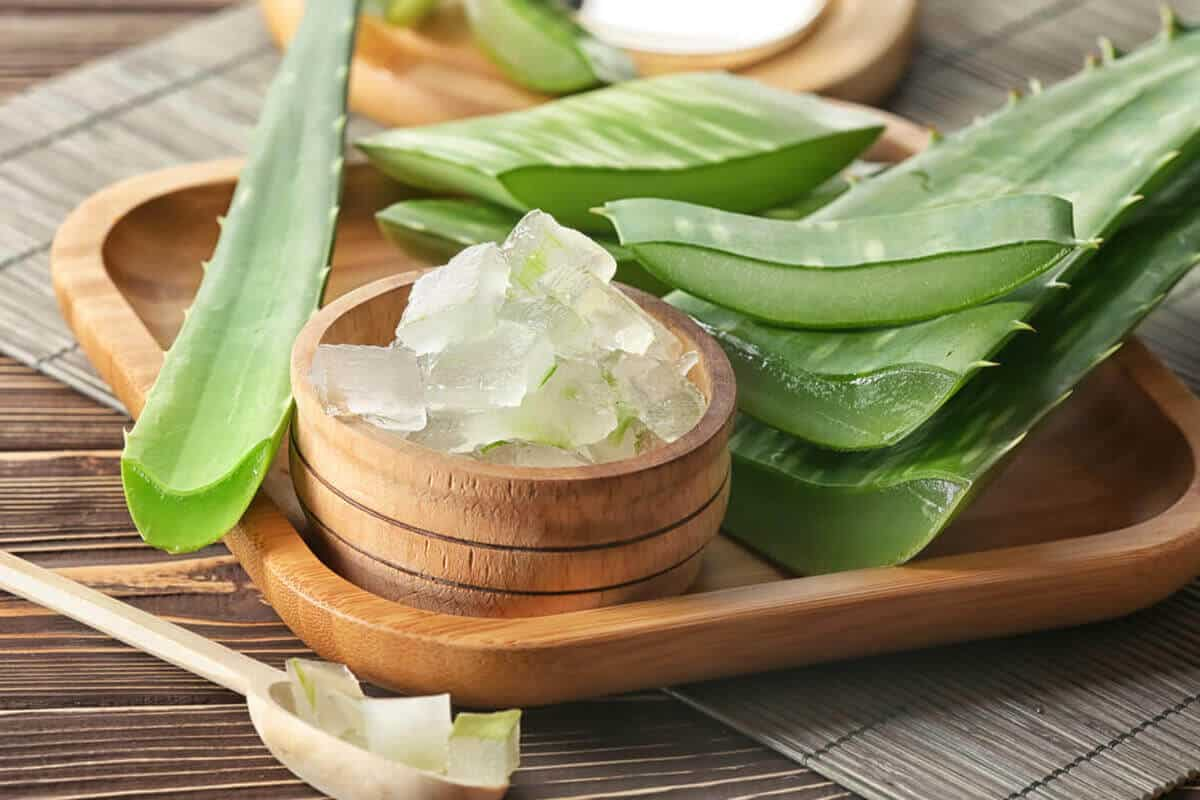 Aloe vera plant and extract