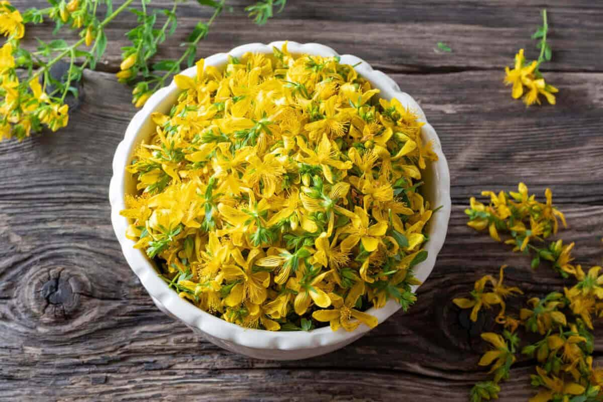 St. John's wort extract plant form