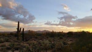 saguaro az