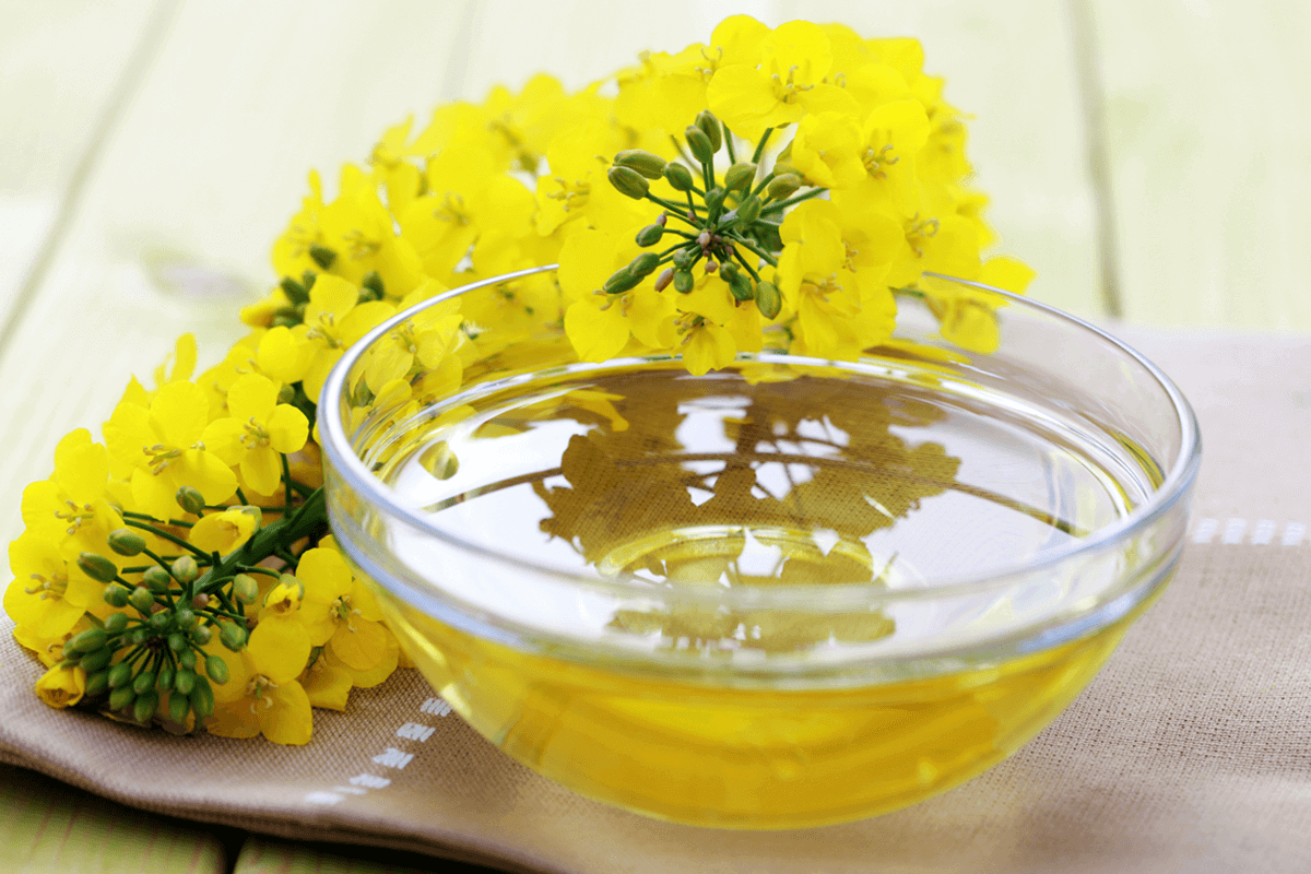canola oil in a glass dish with canola plant next to it