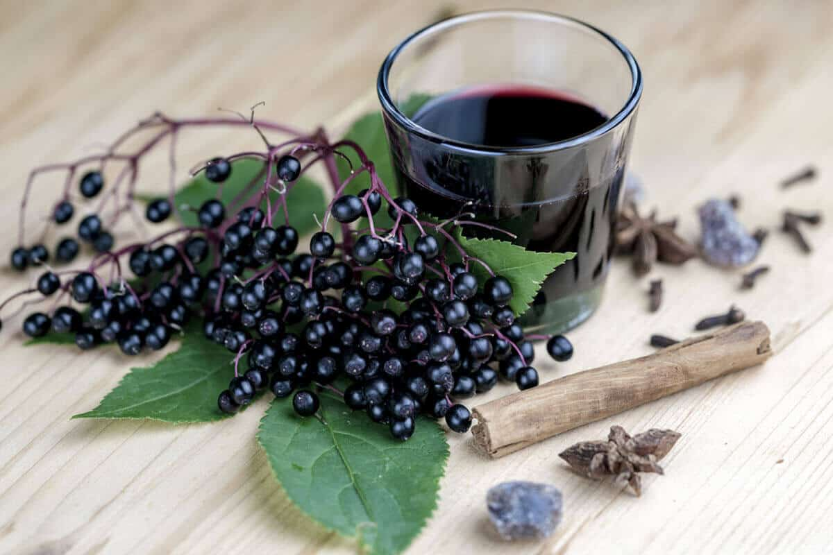 elderberry plant and juice extract