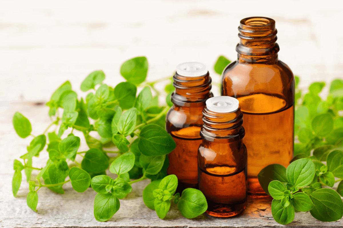 Oregano essential oil bottles next to Oregano plant