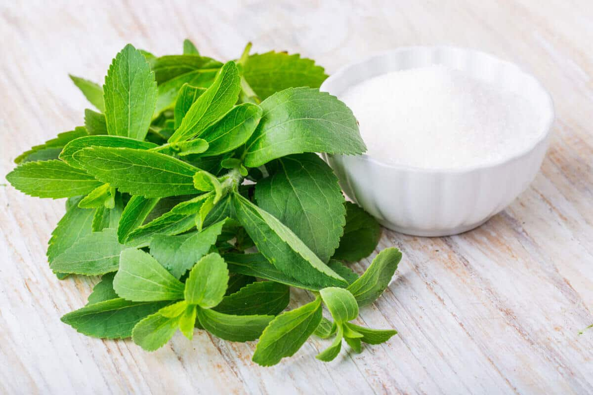Stevia plant and stevia extract in powder form in a white bowl