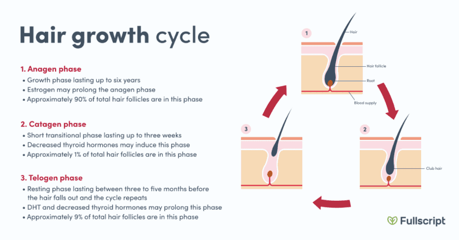 Hair growth cycle phases