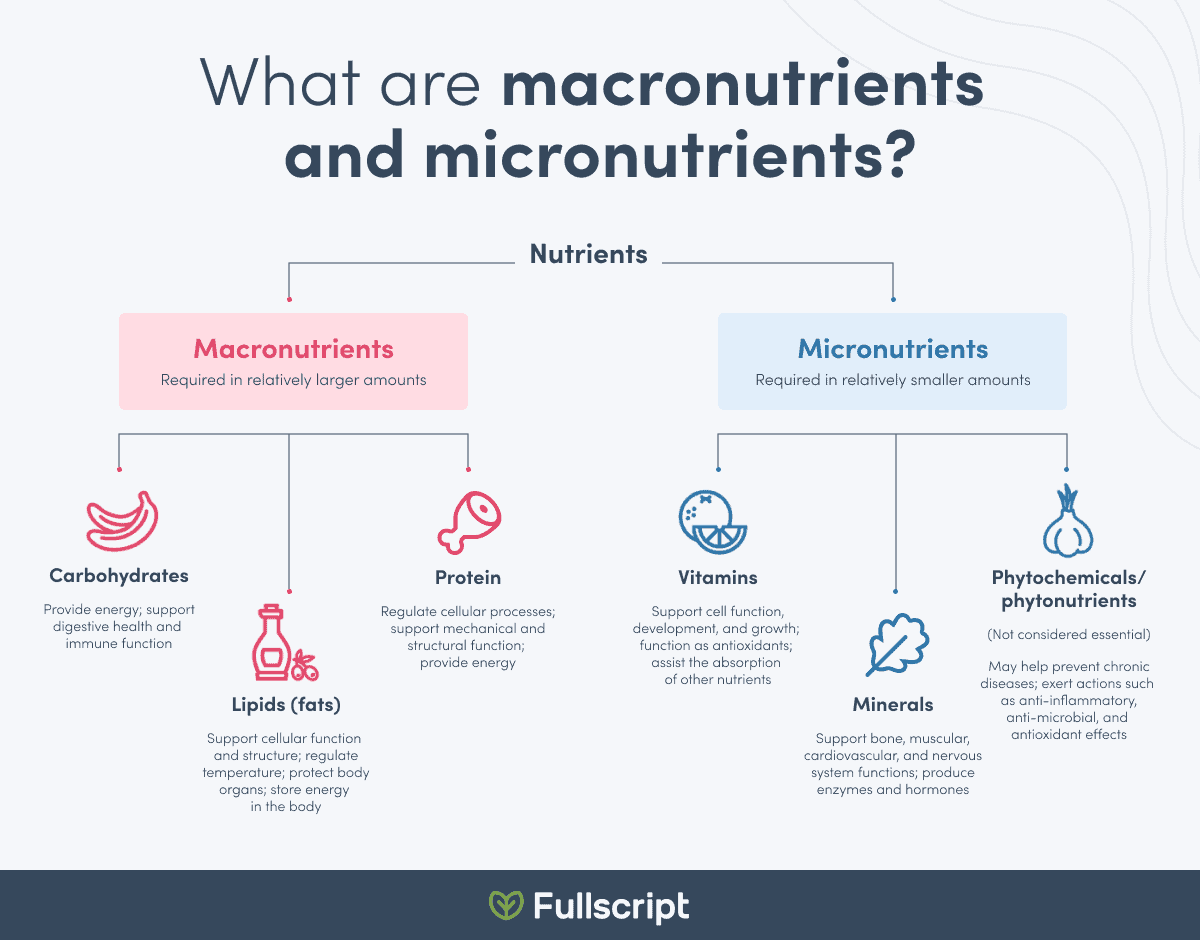 infographic showing the top macronutrients and micronutrients