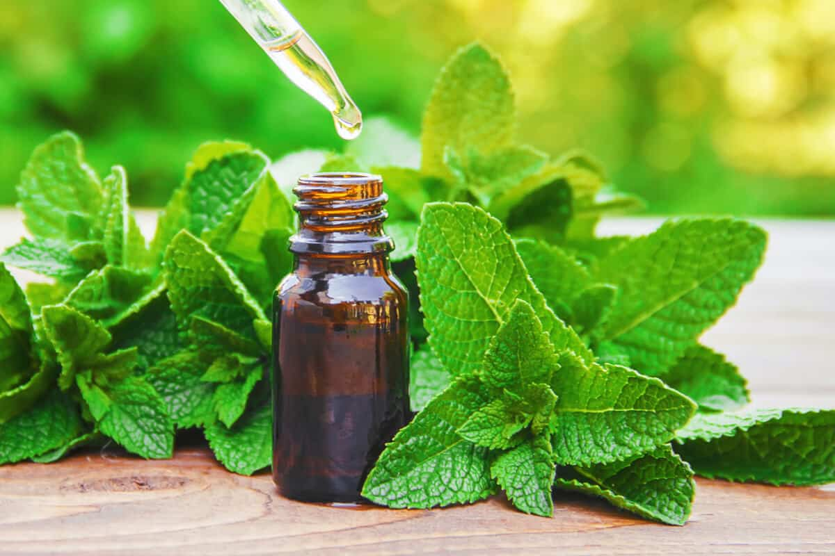peppermint oil in bottle surrounded by peppermint leaves